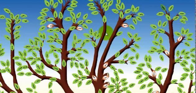 تعرف علي طريقة رسم شجرة العائلة موسوعة انا عربي